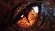 Image de « Le Hobbit - La Désolation de Smaug de Howard Shore »